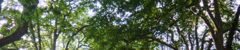 cropped-image79.jpg