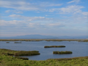 Marshes between Gruissan and Port la Nouvelle